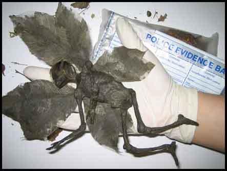 http://roghuzshy.files.wordpress.com/2009/02/jasad-peri-yang-telah-mati-1.jpg